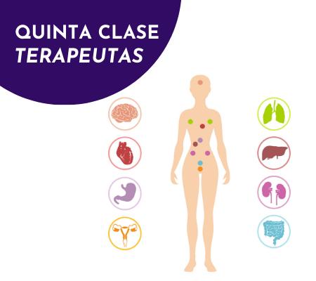 regeneracion de organos – terapeutas (5)